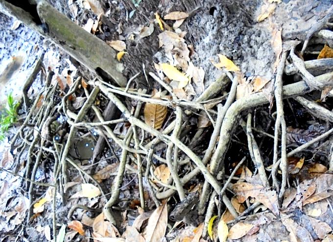 窪みを覆うたくさんの根