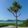 座間味島 阿真ビーチ|まったりのんびりするには最適