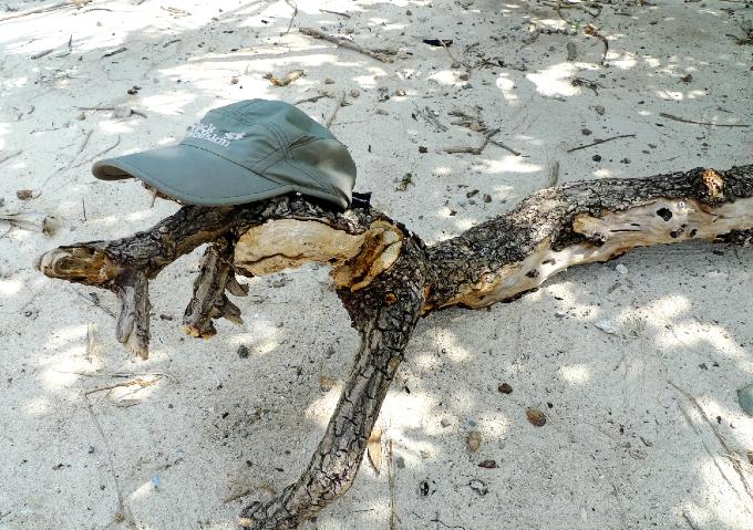 枯れ木に帽子を被せてワニに見たててみました