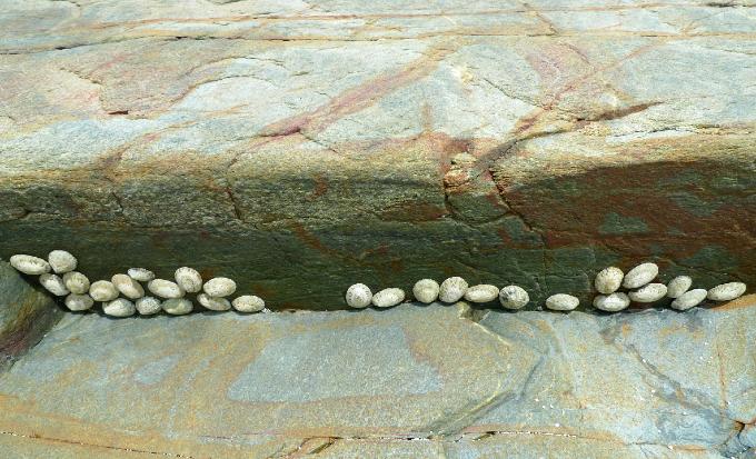 岩の隙間の貝