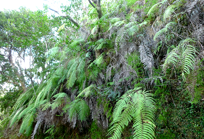 若い葉と枯れ葉が市松模様のようになっている斜面