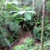 沖縄 国頭村森林公園!亜熱帯植物ジャングル探検記