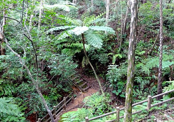 森林公園の亜熱帯植物