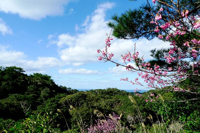 緑色の山の中のピンクの桜の花