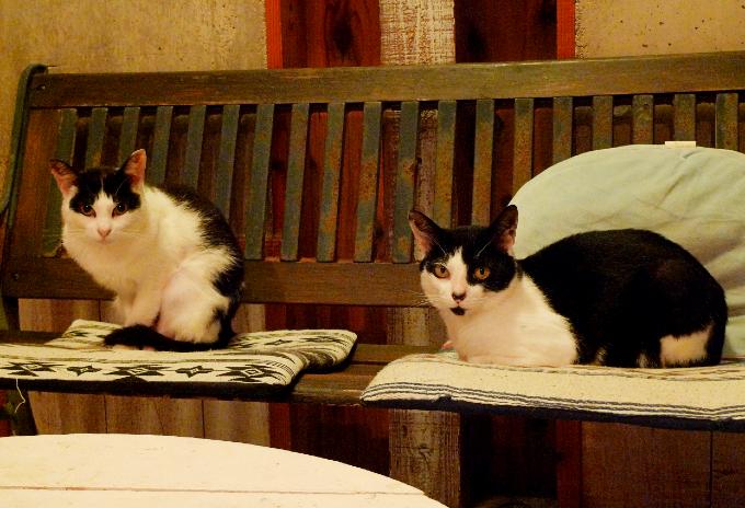 リビングルームの2匹の猫