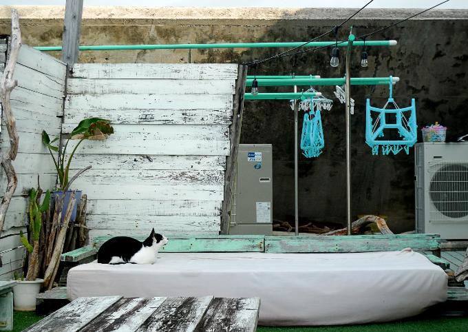 テラスにあるクッションの上にいる猫